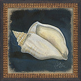 Vintage Seashell 4 Framed Art - By the Sea Beach Decor
