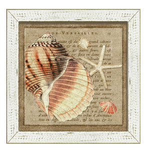 French Seashell I Framed Art - By the Sea Beach Decor