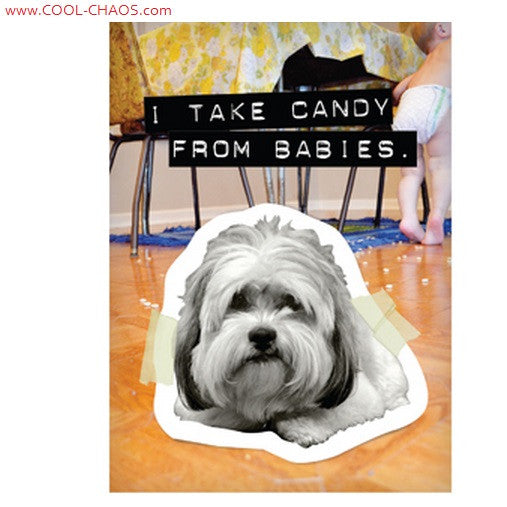 Candy from Baby-Bad Dog Maltese Magnet