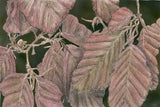 Purple Beech - Limited Edition Giclée Print