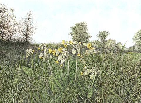 Cowslips - Limited Edition Giclée Print