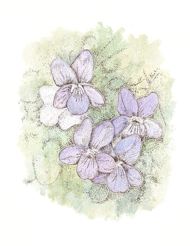Common Dog Violet - Framed Original Art