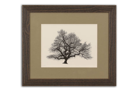 Bare Oak - Limited Edition Giclée Print