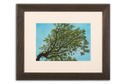 Spring Ash - Framed Original Art