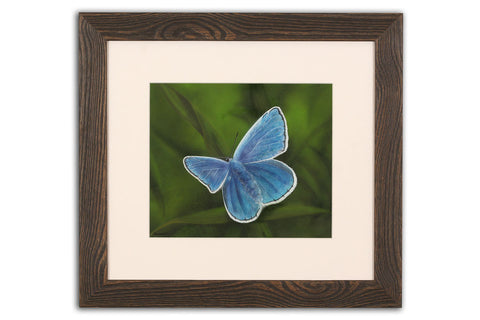 Common Blue - Framed Original Art