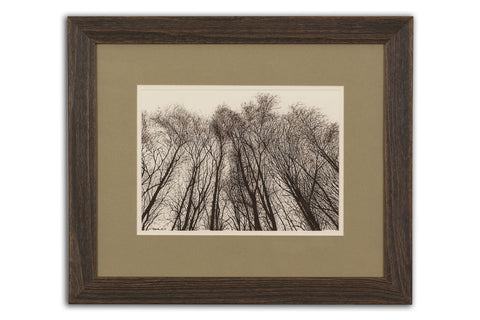 Winter Birch II - Limited Edition Giclée Print