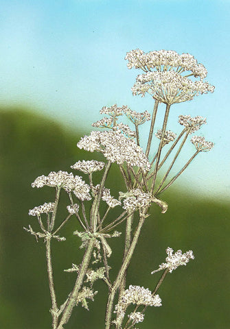Cow Parsley III - Framed Original Art