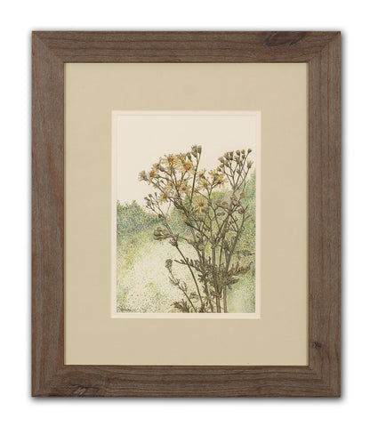 Common Ragwort - Framed Original Art