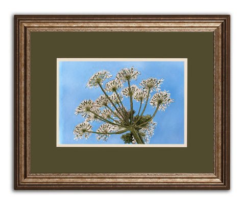 Cow Parsley V - Framed Original Art
