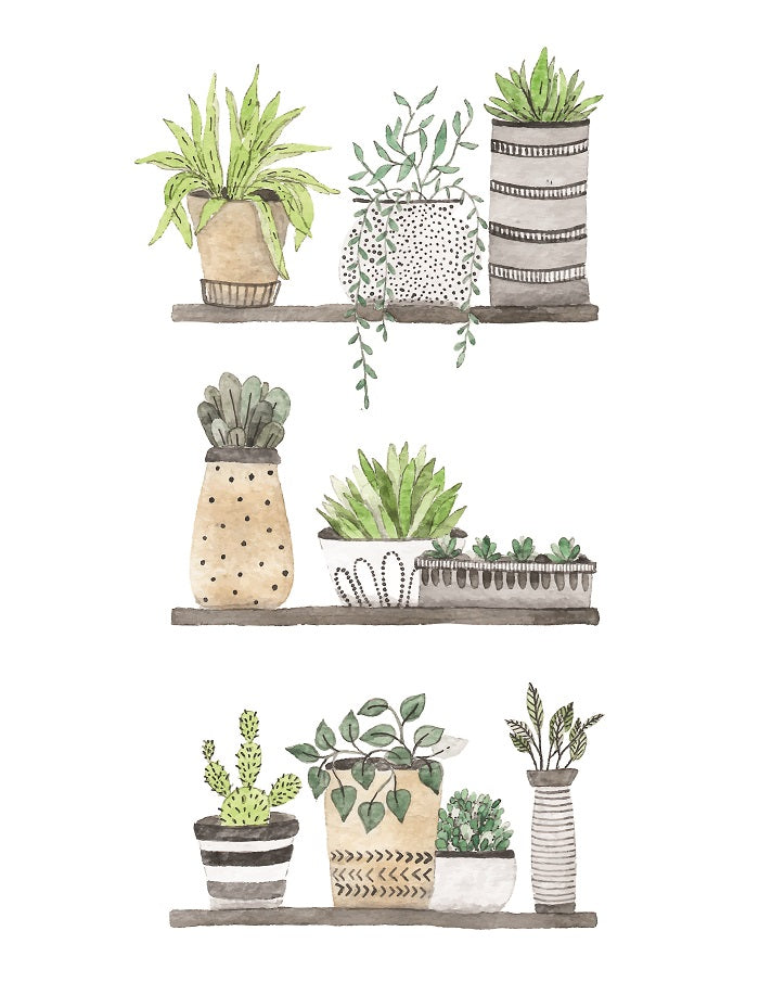 Succulents-Nchanted-Gifts