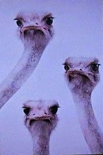 Load image into Gallery viewer, Funny-Ostrich-Nchanted-Gifts