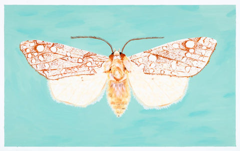 Acrylic Painting at alishamerrickart Original Moth Image