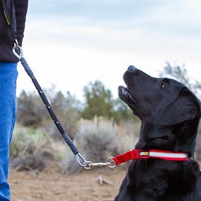 Chew-Proof® Leash - Heavy Duty for Large to Extra-Large Dogs