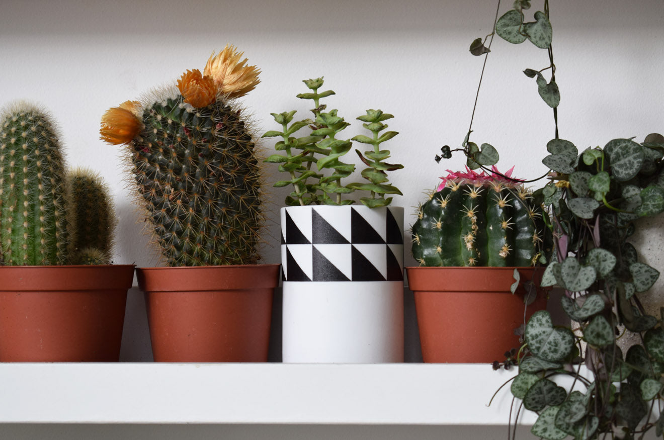 Cactus in scandinavian black and white geometric plant pot Geo-Fleur