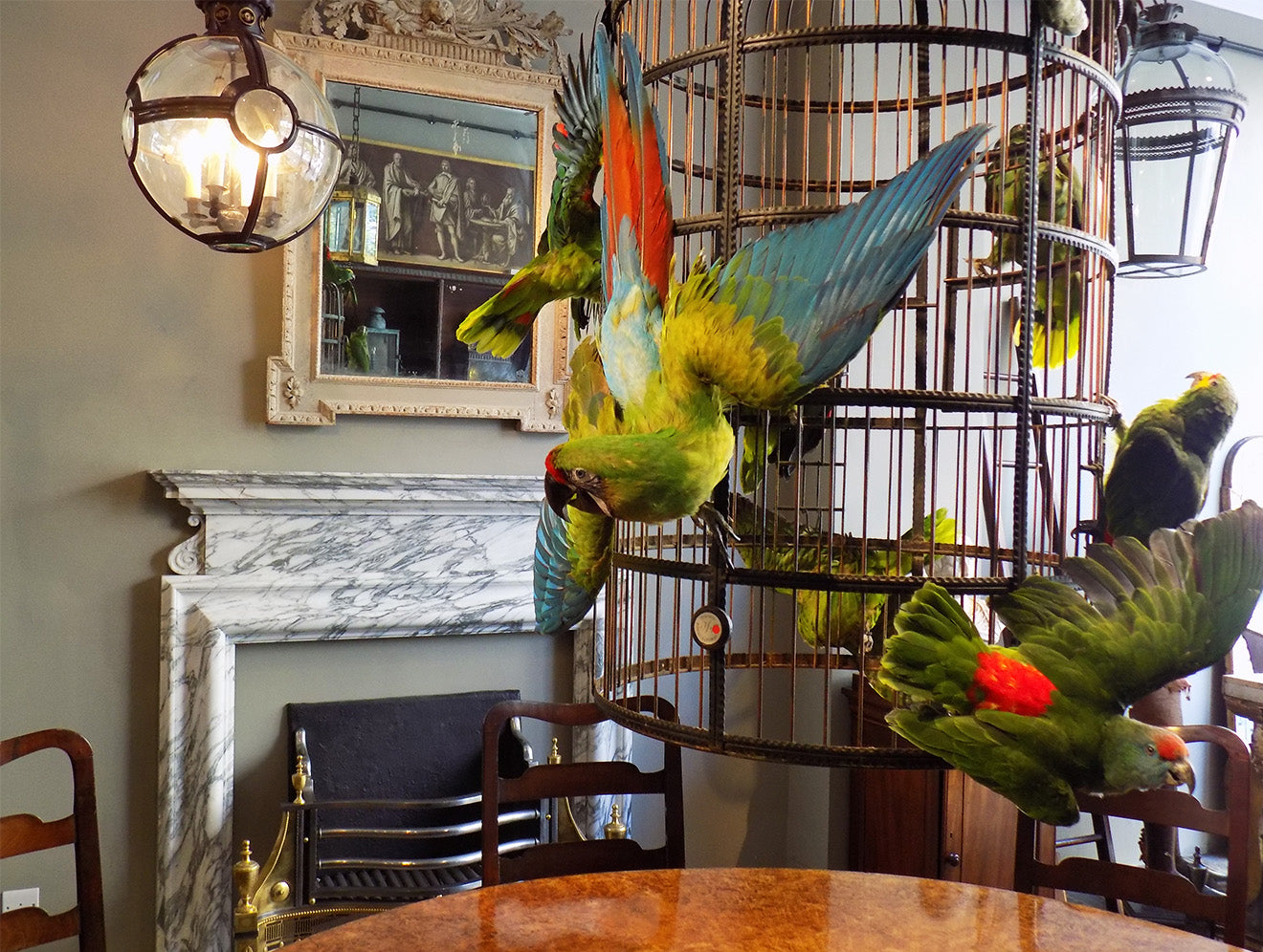 Parrot taxidermy display at Jamb