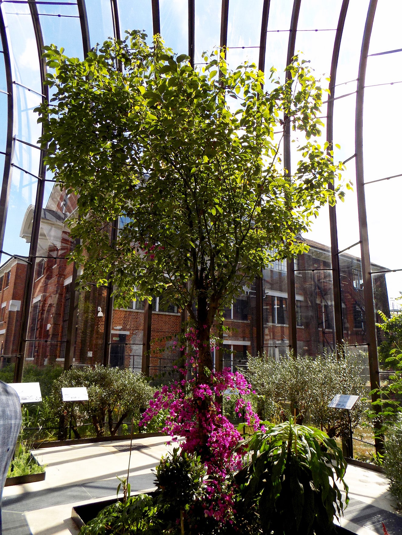Beautiful modern glass architecture growing botanicals at the Bombay Sapphire gin distillery