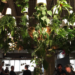 Boskke sky planters upside down plant pots on display at Multiplex