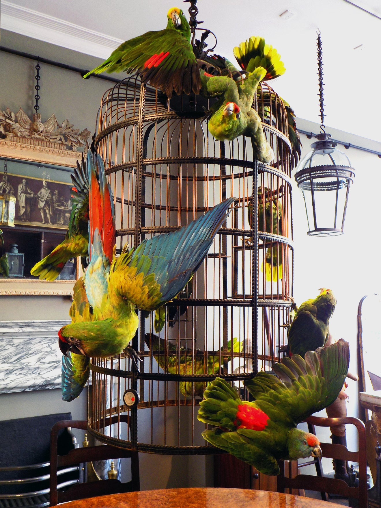 exotic bird taxidermy art on display at Jamb Pimlico Road, London
