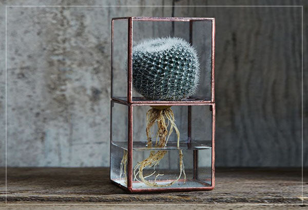 Copper and glass cute terrarium with exposed roots