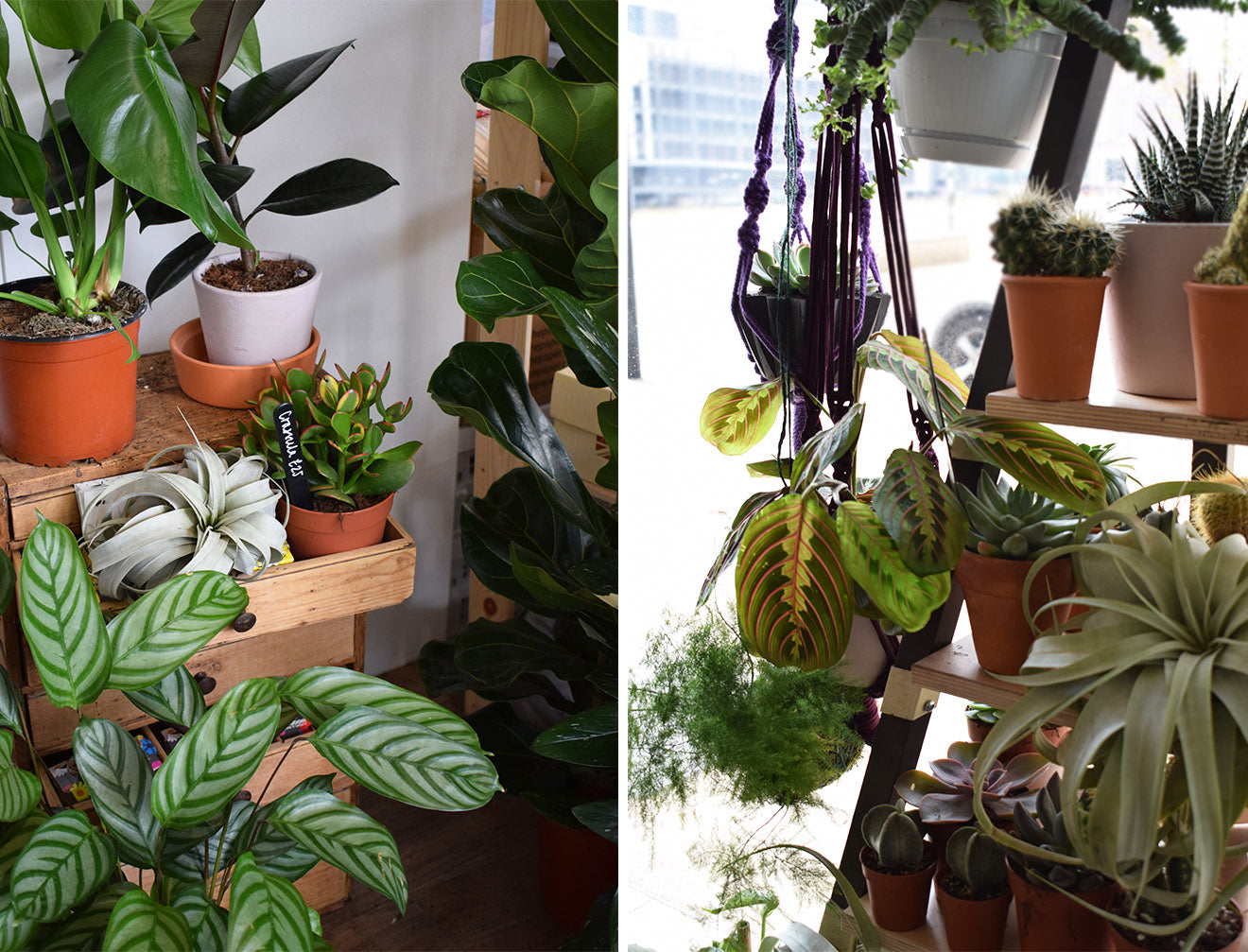 Beautiful plants for the home interior design Geo-Fleur London