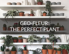 geo-fler discovering the perfect plant
