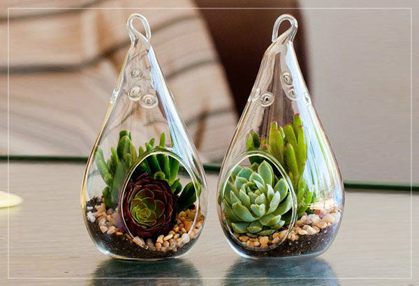 Glass pear shaped terrarium suspended