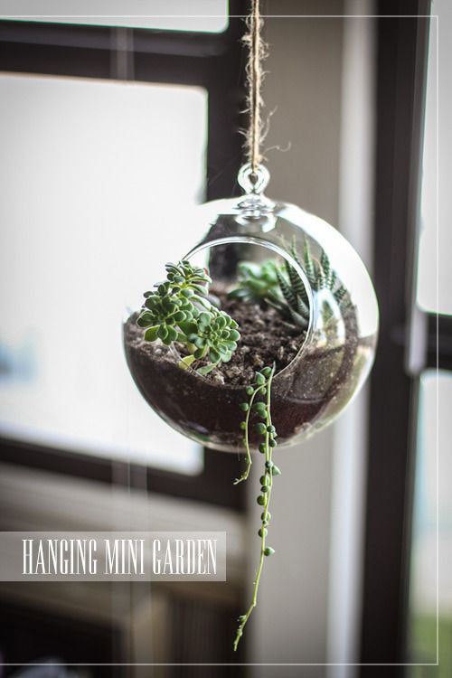 glass suspended circular terrarium with succulent plants. House plant inspiration