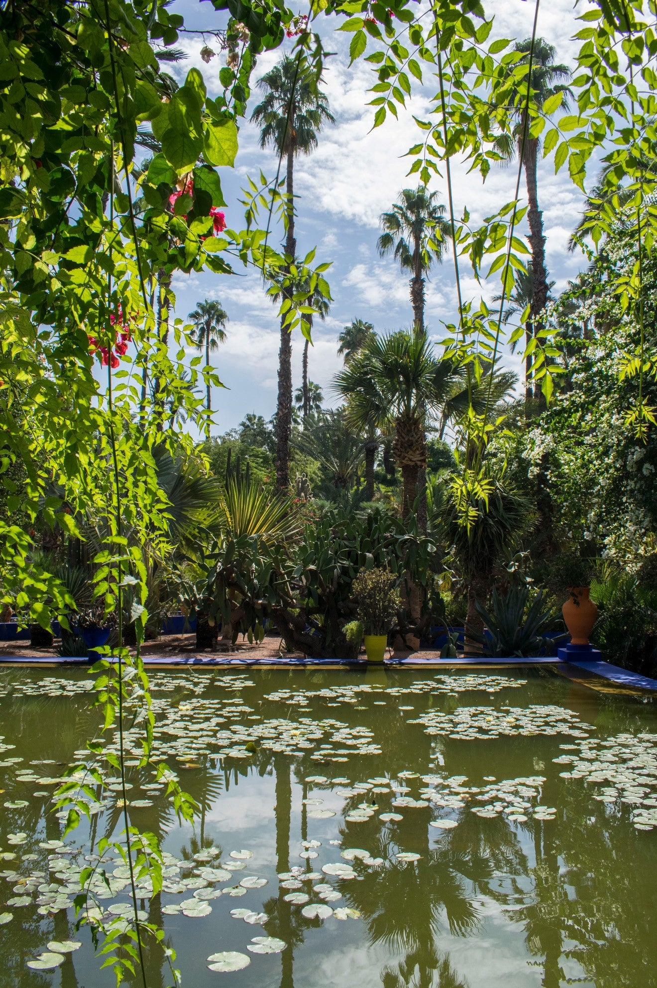 YSL Garden Marrakech palms and pond