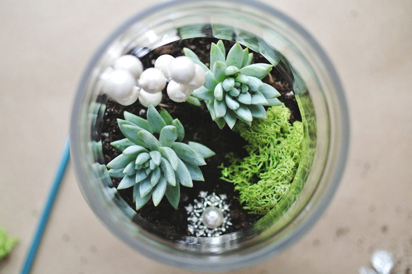 modern terrarium designs  martyn white designs - i take a look at the increasingly popular terrarium designs appearing inall corners of the interior world and discover some gorgeous designs thatcan work