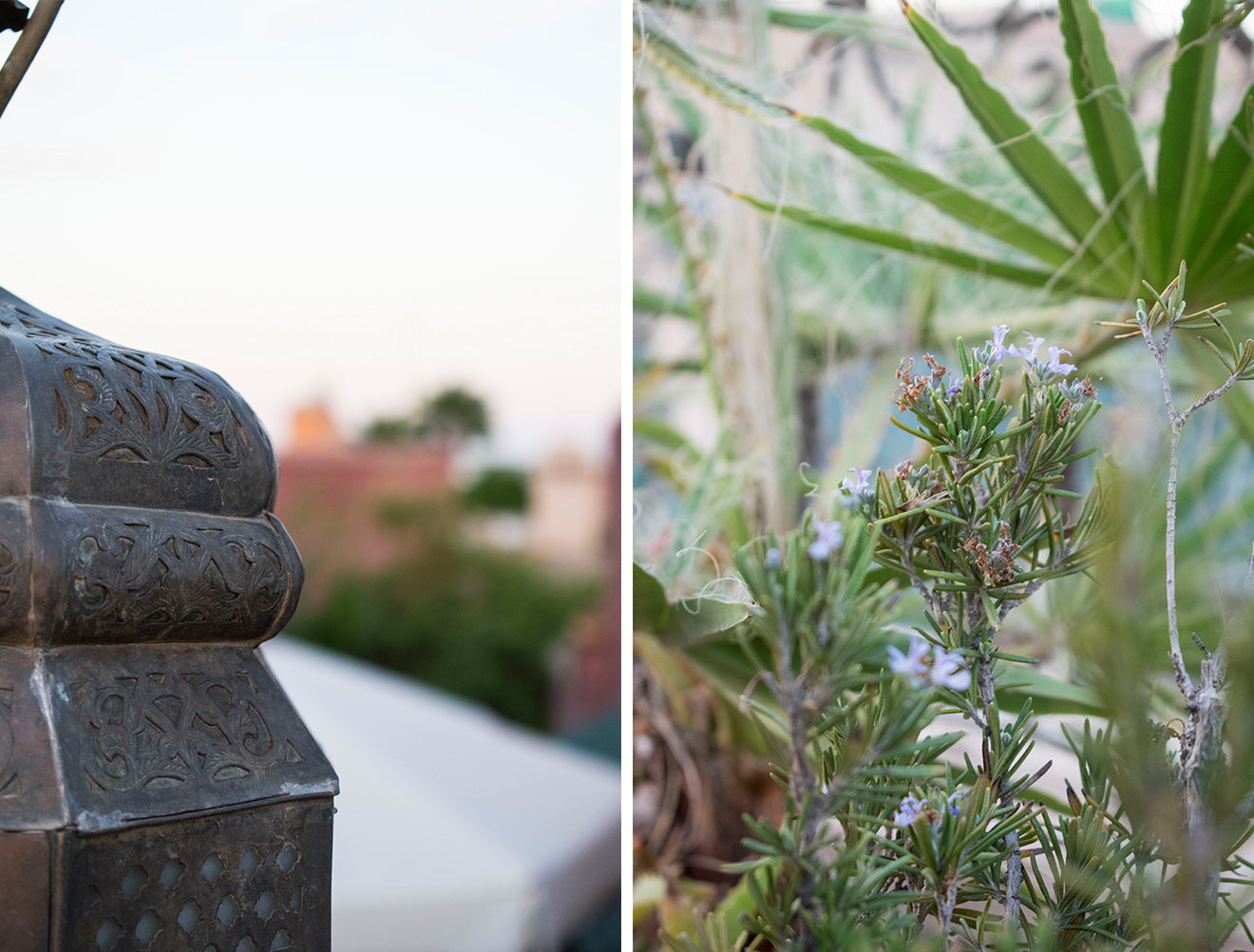 Rooftop plants at luxury boutique Moroccan hotel Dar Jaguar