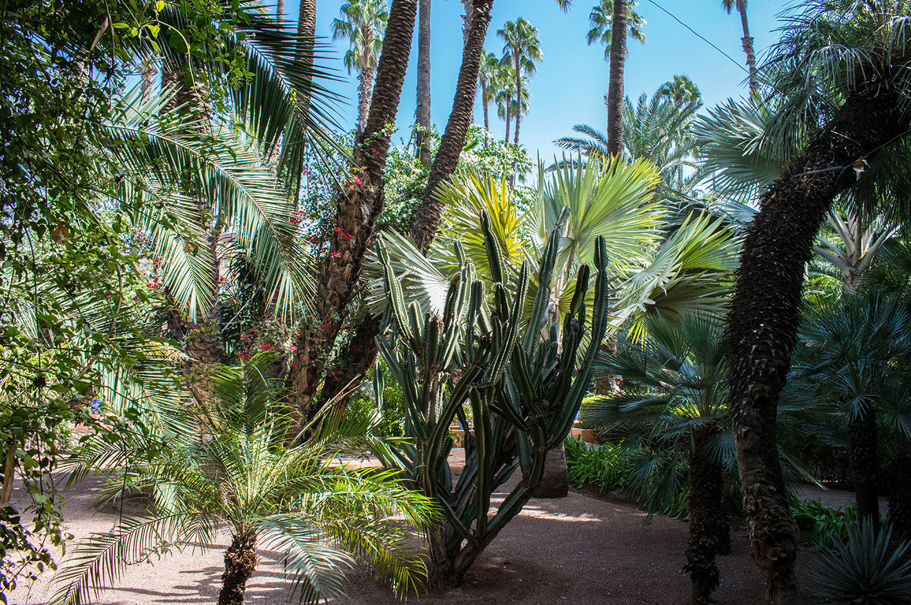 Tropical garden in Marrakech Morocco by YSL