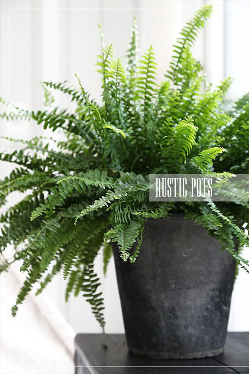 rustic plant pots concrete plant container with fern
