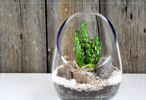 Modern glass terrarium design with succulent plant and stones