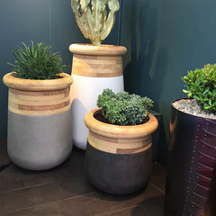 succulents in wooden panelled pots