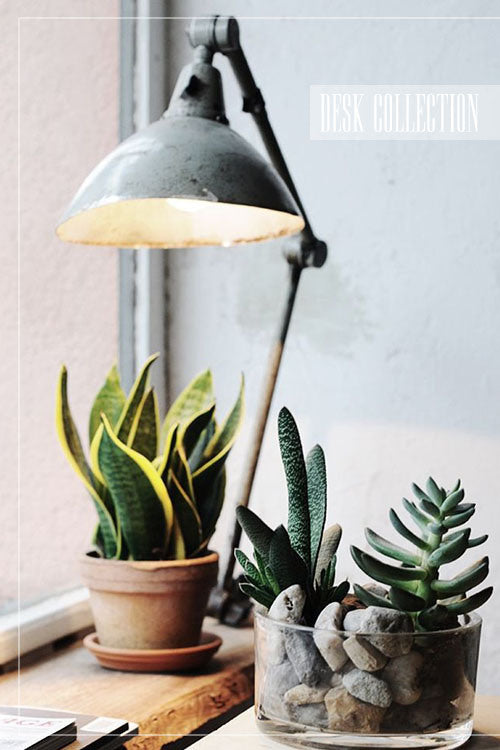 Decorating with house plants. Exotic desk and table house plants