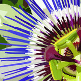 Abstract flower artwork purple and white passion flower detailing