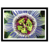 Abstract flower artwork purple and white passion flower