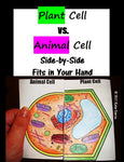 Plant & Animal Cell Comparison Side-by-Side