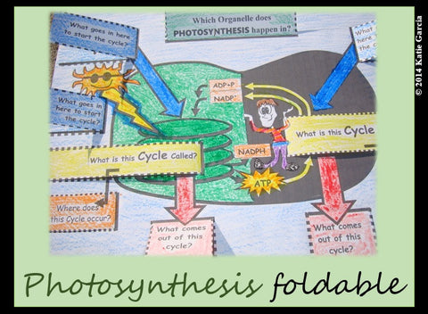 Photosynthesis in Chloroplast Foldable