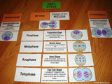 Mitosis Card Activity