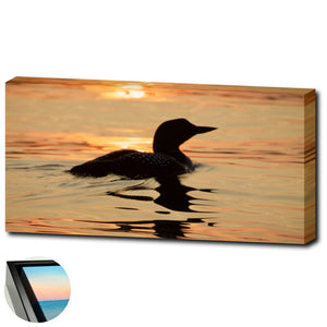 Sunset Loon  - Framed