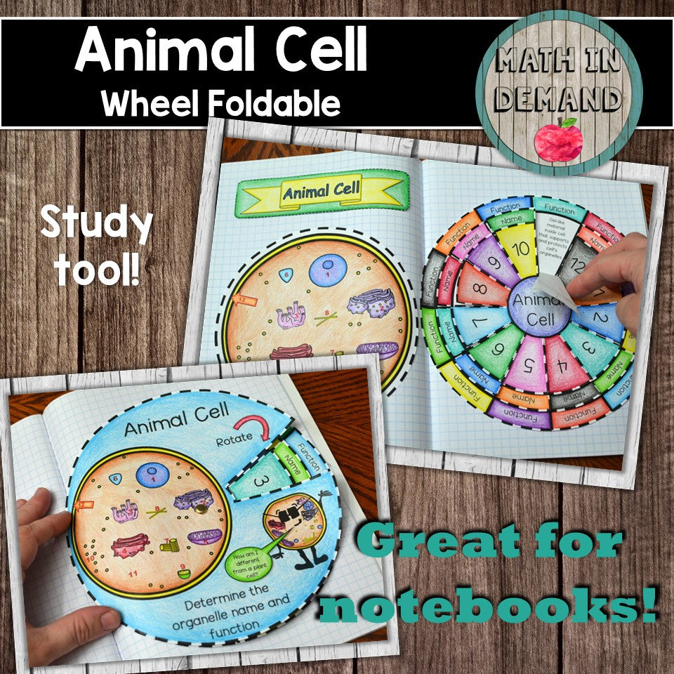 Animal Cell Foldable