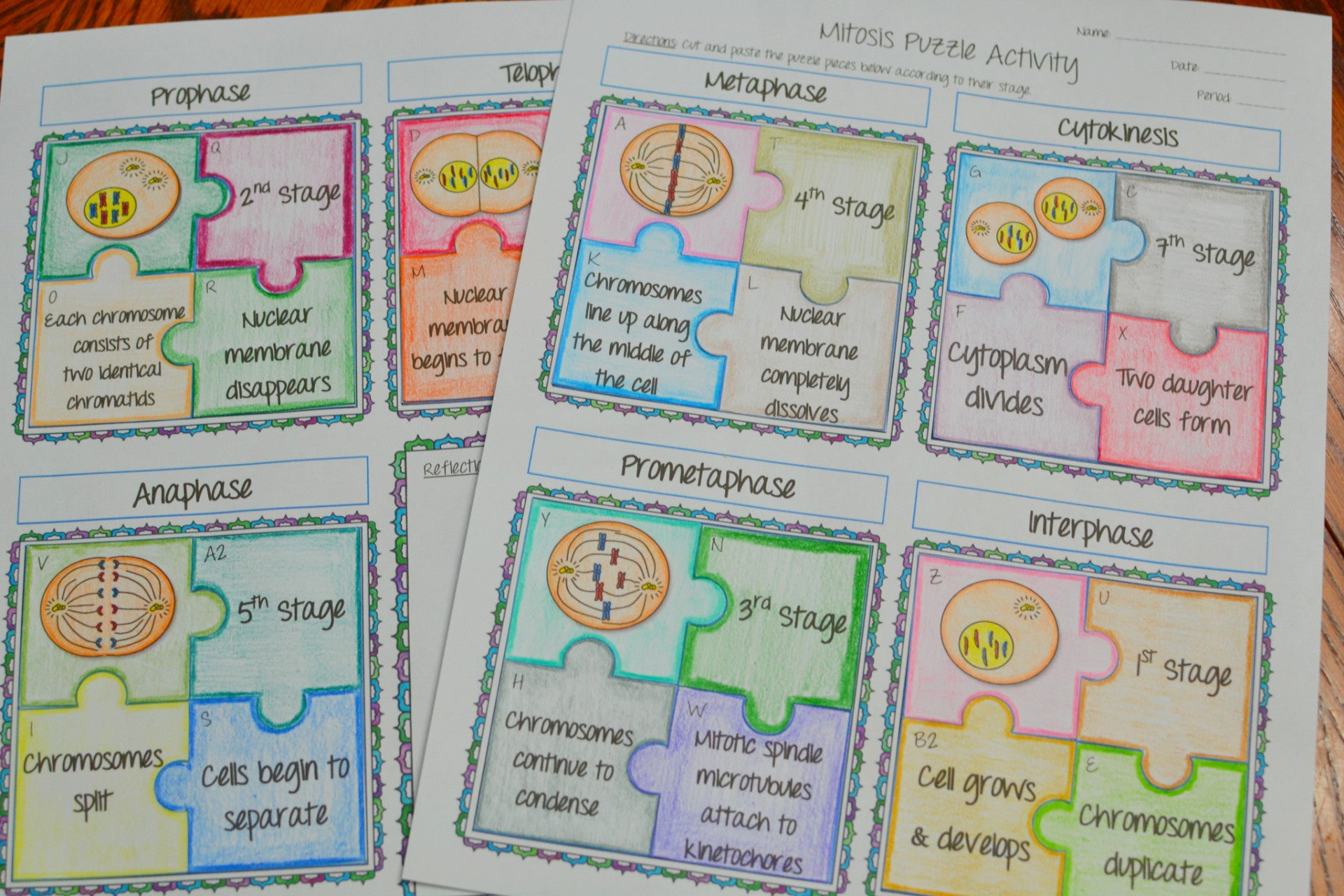 Mitosis Puzzle Activity - Math in Demand