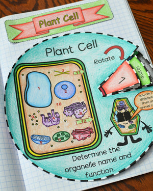 Plant Cell Foldable