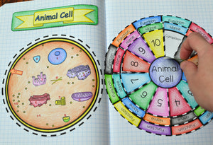 Animal and Plant Cell Foldable