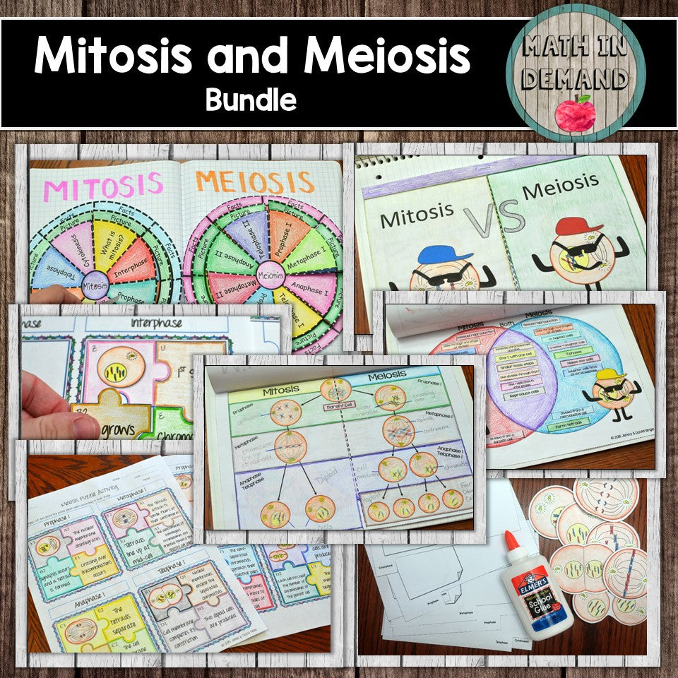 Mitosis and Meiosis Bundle