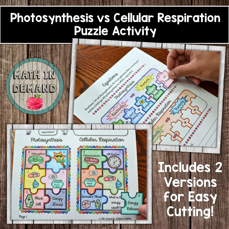 Photosynthesis Vs Cellular Respiration Worksheet - Geotwitter Kids