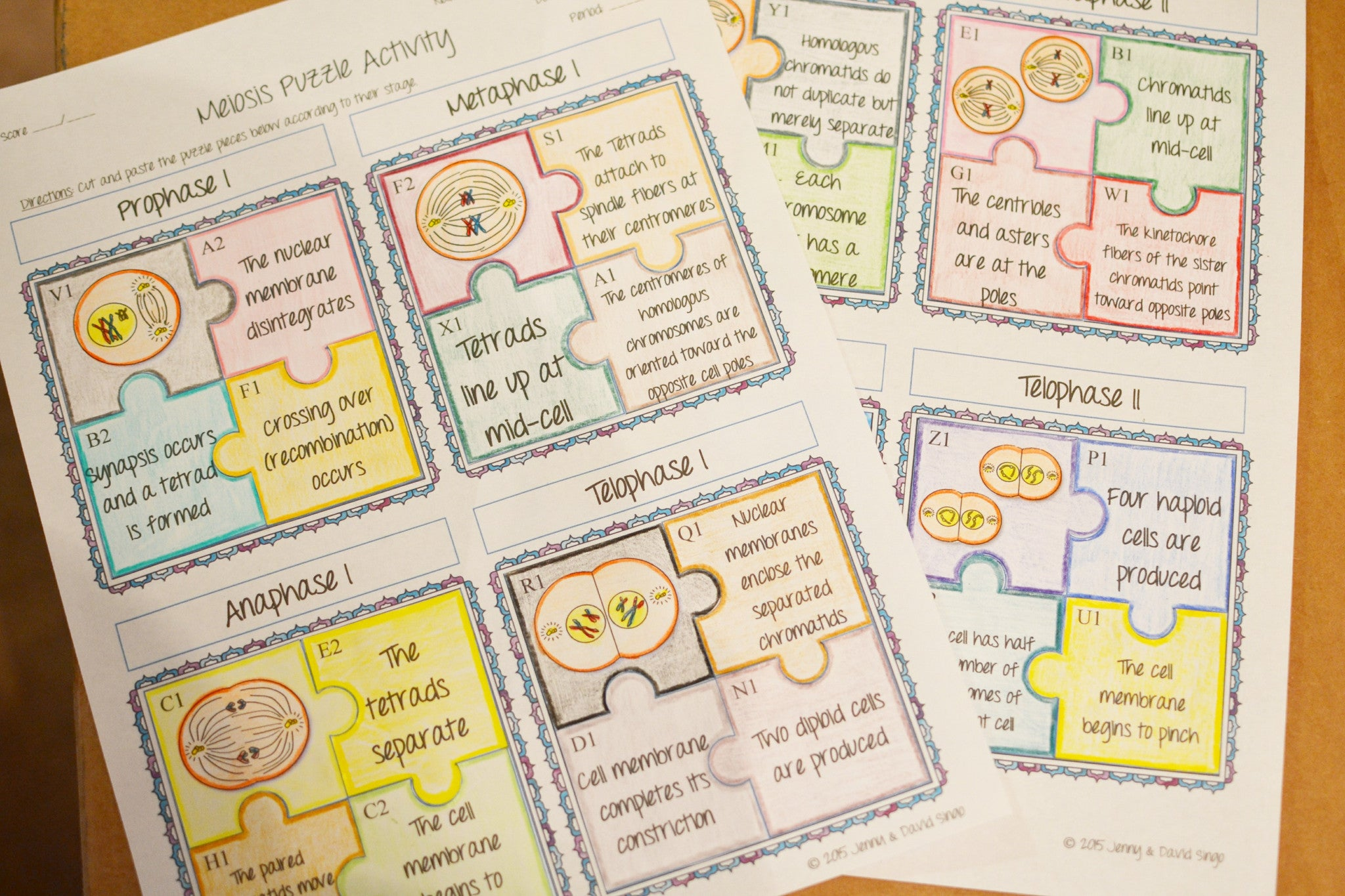 Meiosis Puzzle Activity - Math in Demand