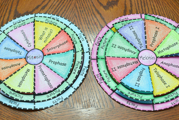 Mitosis and Meiosis Foldable