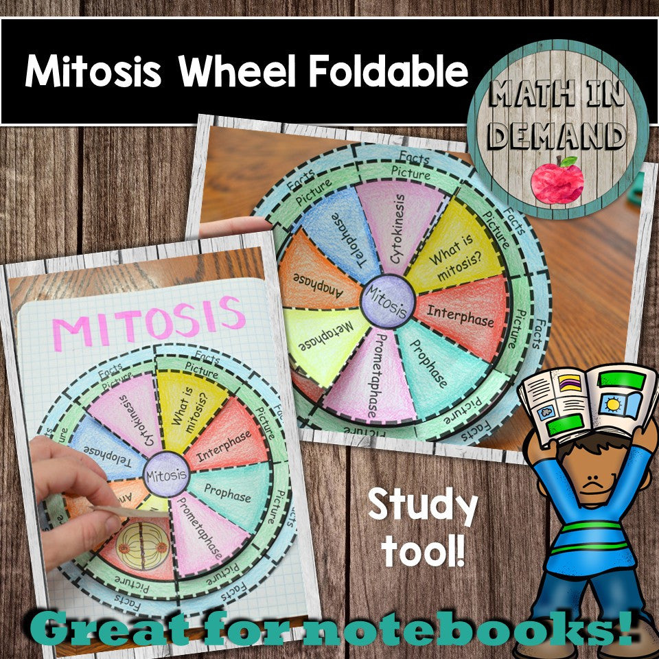 Mitosis Foldable
